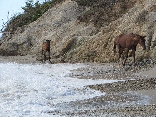 Wild horses on Playa Negra